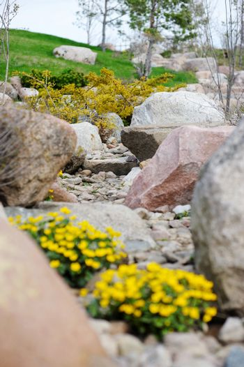 Marsh marigold blossoming on the stones
