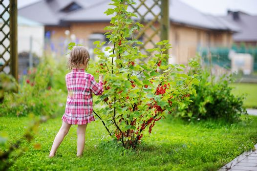 Little girl picking red currants