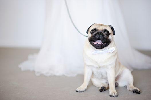 Funny dog at wedding