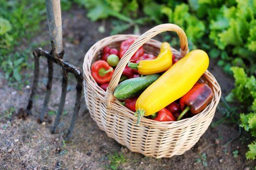 Fresh organic vegetables in a basket