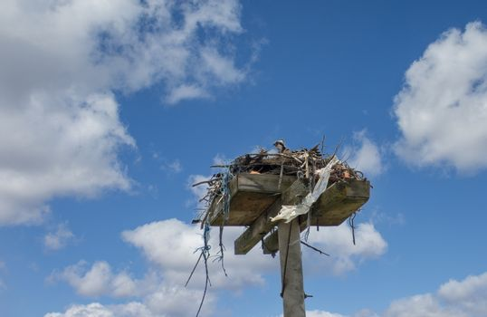 A wooden box is mounted high on a concrete pillar especially for eagles protecting farm fields from pests