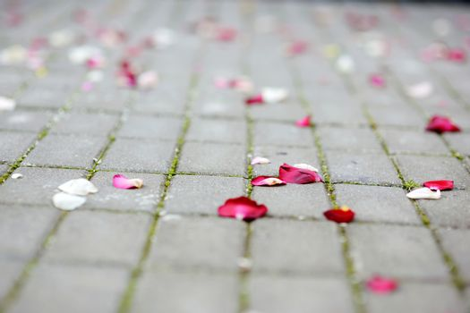 Rose petals laying at the ground
