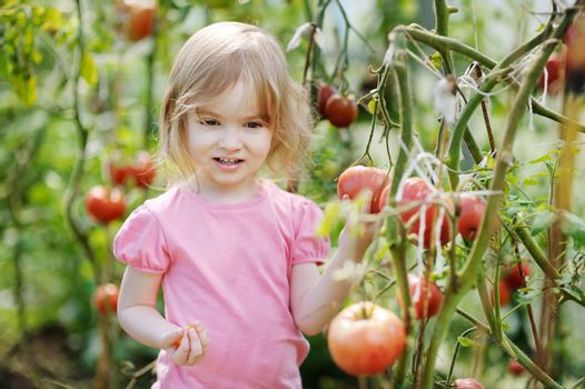 Adorable girl picking tomatoes in a garden