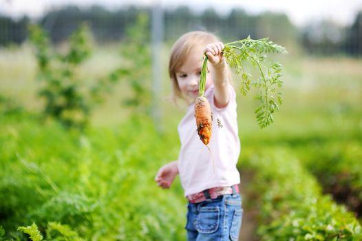 Adorable girl picking carrots in a garden