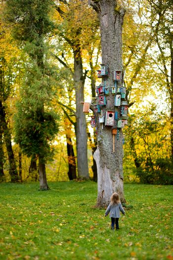 Lots of nesting boxes on a tree