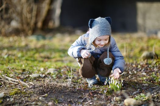 Little toddler girl touching snowdrops