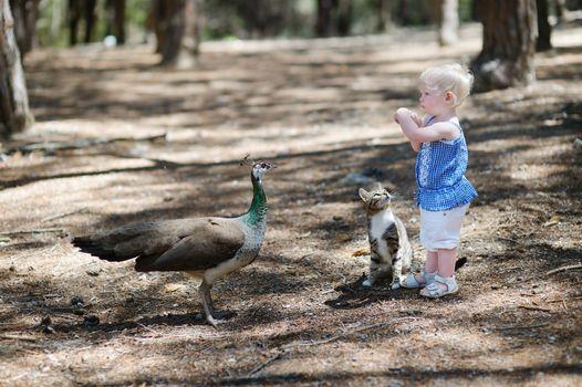 Adorable toddler girl feeding a peacock