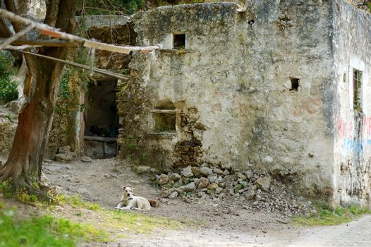 A dog lying by a very old house
