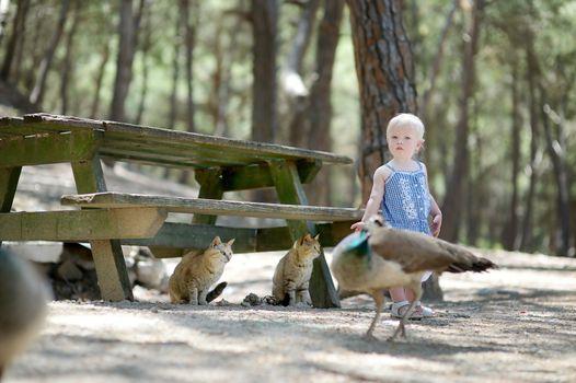 Adorable toddler girl feeding peacocks