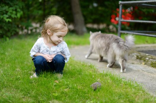 A girl looking at a hedgehog