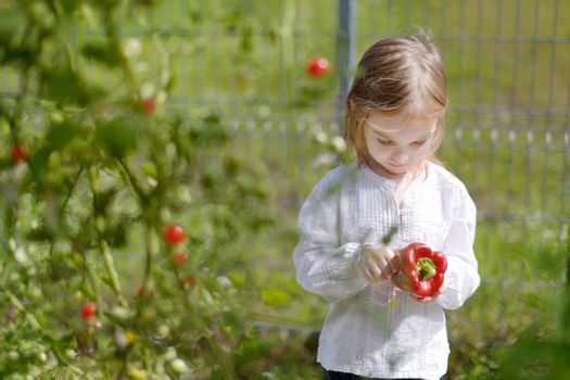 Adorable little girl picking peppers