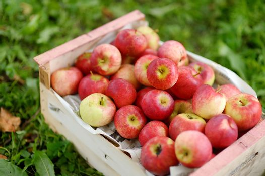 Crate of fresh ripe apples on green grass