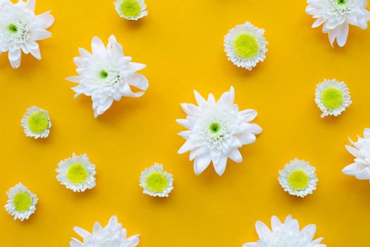 Composition of white yellow flowers. Chrysanthemums on yellow paper background