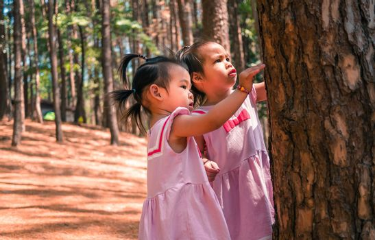 Asian little girl playing together in the pine forest at Chiang Mai, Thailand, looking bark of tree. Playing is learning for children.