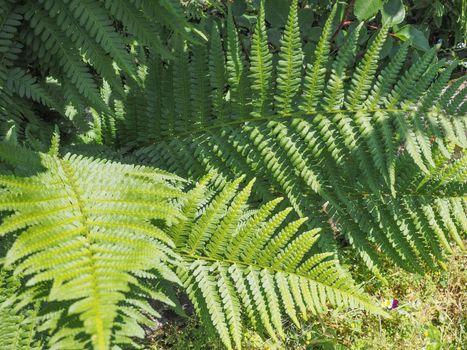 green fern plant leaves
