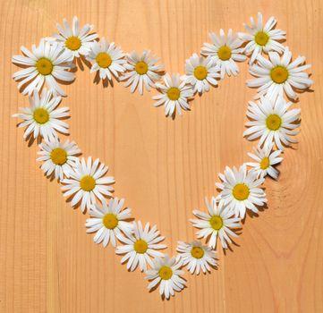 Daisy flower frame in shape of heart