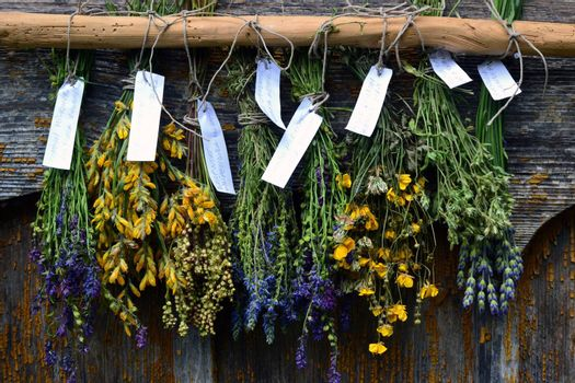 Bunches of dry herbal plants hanging on old wooden wall