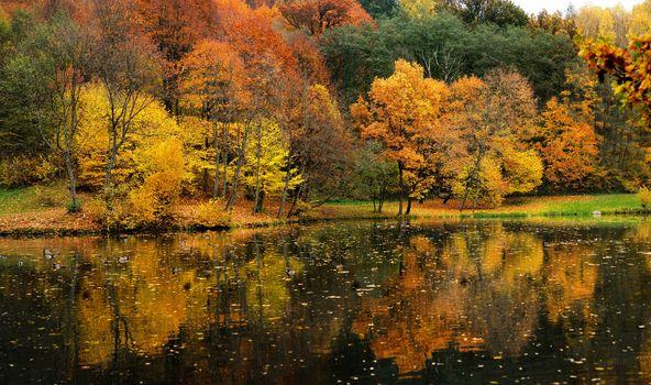 Idyllic autumn scenery