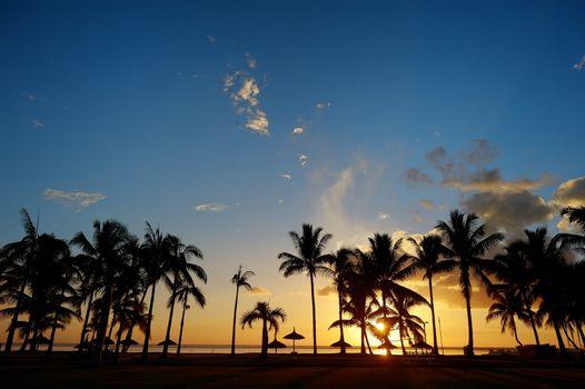 Palm tree silhouettes on sunset beach