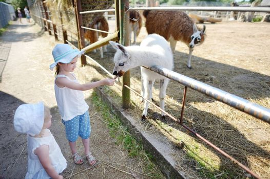 Two little sisters feeding a baby llama at the zoo on sunny summer day