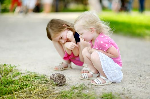 Two sisters playing with a hedgehog