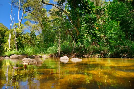 Beautiful tropical river in Waimea Valley park on Oahu island