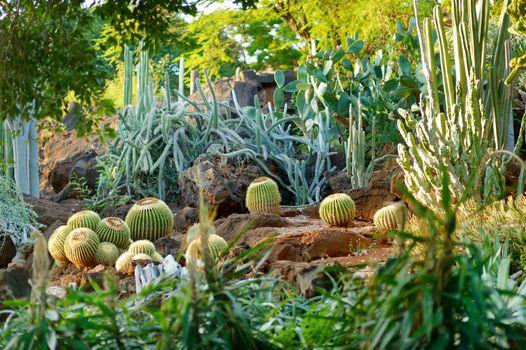 Variuos cactuses at the Cactus Garden