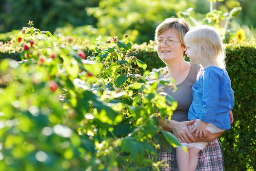 Grandmother and her baby girl picking raspberries in a garden