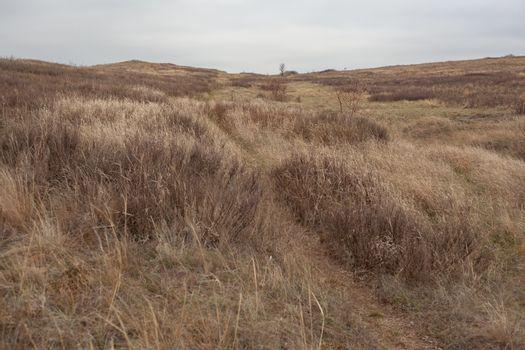Autumn lanscape in the steppes