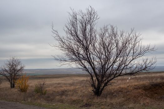 Autumn lanscape in the steppes with tree