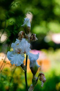 Colorful petal of blooming flower in spring