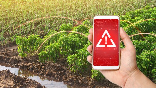 A phone and a warning sign on the background of bell pepper and leek onions plantations. Growing vegetables on the farm, harvesting for sale. Agribusiness and farming. Improving efficiency