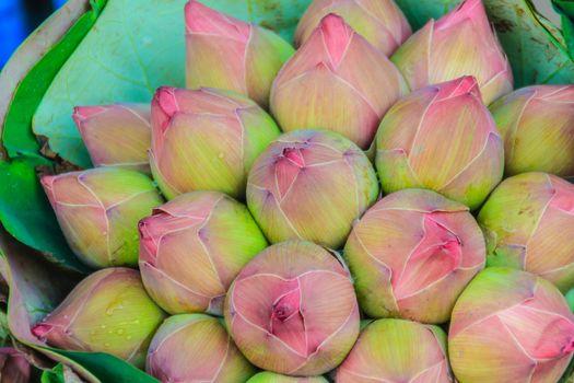 Bunches of pink sacred lotus (Nelumbo nucifera Gaertn) waiting for sale in flower market, Bangkok, Thailand.