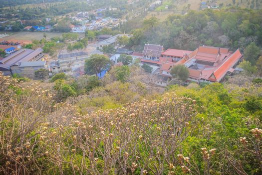 Forest of Plumeria flower trees on the mountain at Wat Khao Bandai It, Phetchaburi, Thailand.
