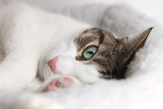 Close up of tabby cat sleeping in his bed