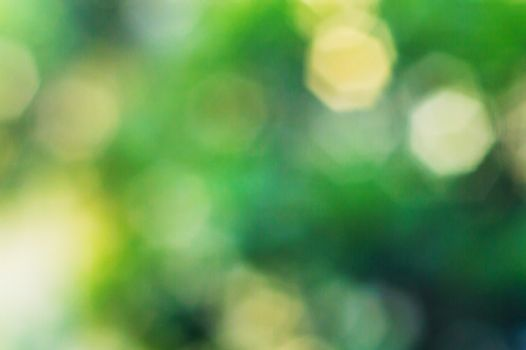 The Green polygon bokeh of the tree background