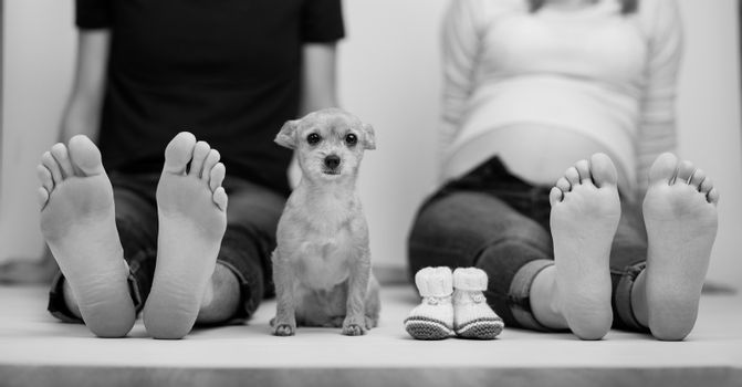 pregnant couple with dog in love with baby belly. showing bare feet on white background