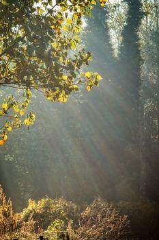 Autumn sunbeam