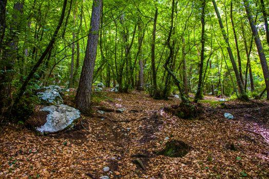 lush forest of trees near Lake Ledro in Trento, Italy