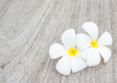 Tropical flowers frangipani on wood background