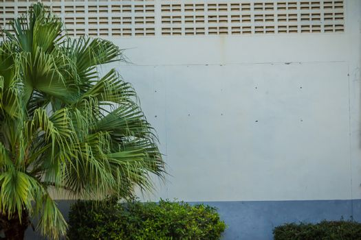 Green grungy painted brick wall copy space with green palm leaves background. Green leafs on green cracks painted brick wall with copy space for text.