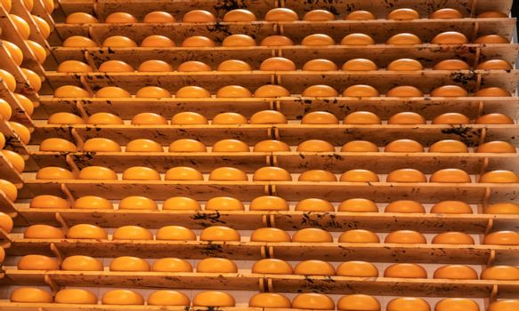 Wall of cheese wheels in Amsterdam, the Netherlands.