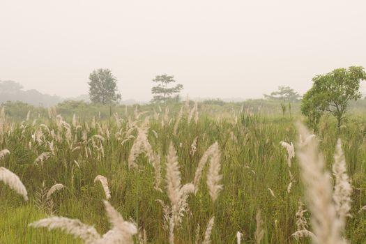 Chitwan National park grasslands at sunrise, Chitwan, Nepal