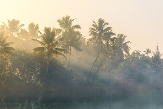 Jungle of palm trees with atmospheric haze at sunset, along a freswater lake in Eramalloor Backwaters, a popular tourist destination and yoga retreat in Kerala, India