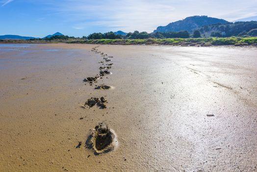 Human footprints in mud and sand marsh in Gialova lagoon, Greece