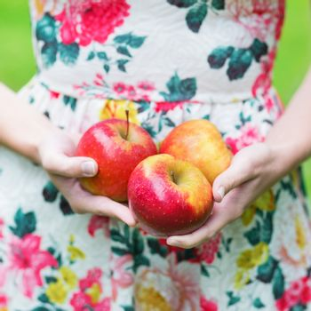 Closeup of female hands holding ripe red apples