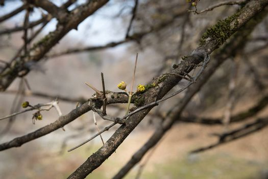Tree in early spring. View from below. Azerbaijan nature. Selective focus.
