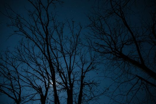 Super moon behind tree silhouette in the winter forest at night. Beautiful night landscape of mountain village under the moonlight. Azerbaijan nature. Long exposure shot