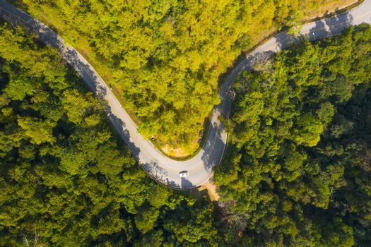 Driving Through Forest - Aerial View