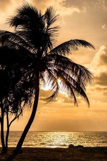 Silhouetted coconut tree on beach with cloudy sky at sunset.
